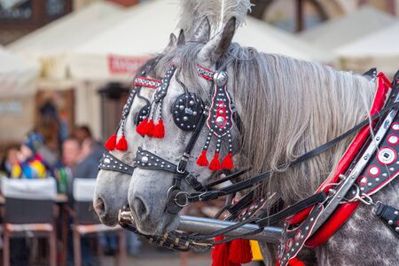 Horses pulling carriage in ornate harness in close-up view. 스톡 콘텐츠