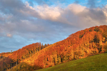 Rural landscape with forest in autumn colors at sunset.