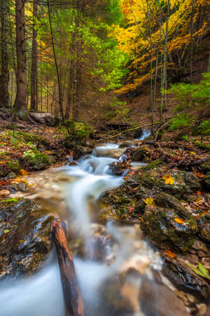 Wild stream in a forest at autumn. The Vratna valley in Mala Fatra national park, Slovakia, Europe. Stockfoto
