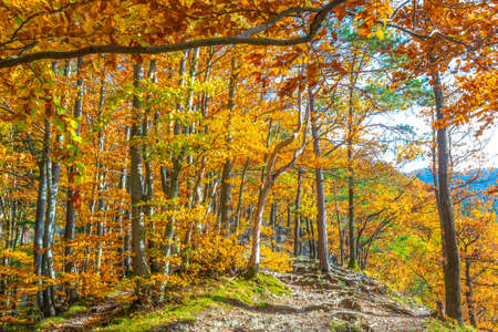 Forest with trees in autumn colors illuminated by sunlight. Stockfoto