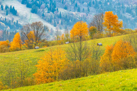 Colored trees in the autumn mountain landscape. The Vratna valley in Mala Fatra national park, Slovakia, Europe. Stockfoto