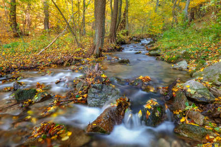 Stream in a forest at autumn. The Mala Fatra national park, Slovakia, Europe.