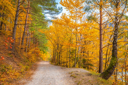 Autumn rural landscape. A dirt road lined with colorful trees.