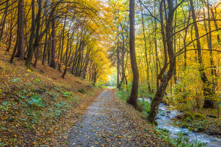 Autumn rural landscape. A road in forest lined with colorful trees. Stockfoto