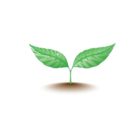 green sprout.  Vector