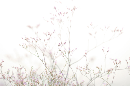 shrub: plant shrub in bright light