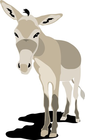 mule: donkey