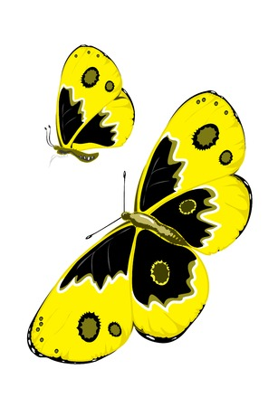 butterfly,nature,wings,beautiful,vector