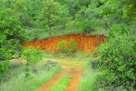 curving: curving gravel road in bushveld