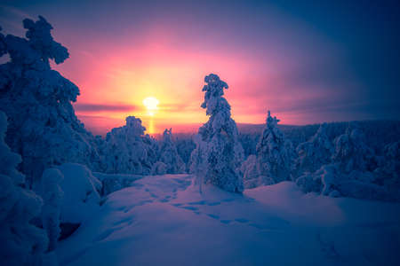 Cold winter day sunset landscape with snowy trees.