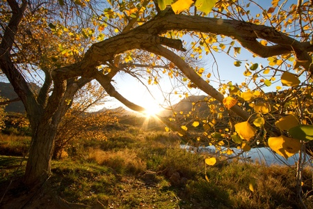 tree in autumn: An autumn tree at sunset Stock Photo