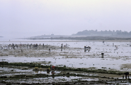 EL GROVE, PONTEVEDRA, GALICIA, SPAIN - JULY, 1983  Several women looking for seafood, beneath the sand of the beach at low tide on July, 1983 in El Grove, Pontevedra, Galicia, Spain