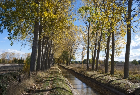 Path along the gutter of the poplars in autumn photo