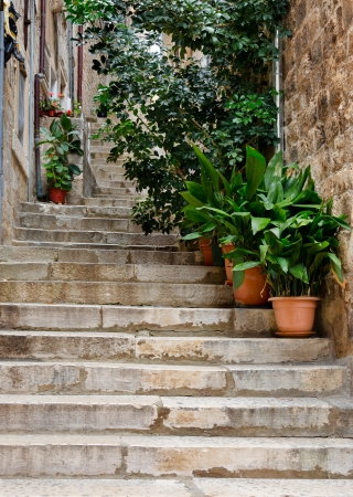 Narrow street with greenery in flower pots on the floor and the walls in Dubrovnik, Croatia photo