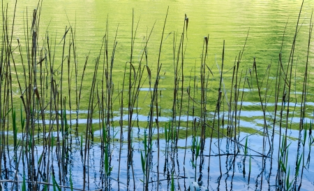 Blades of sedges in Tranquil Calm Lake. Plitvice, Croatia