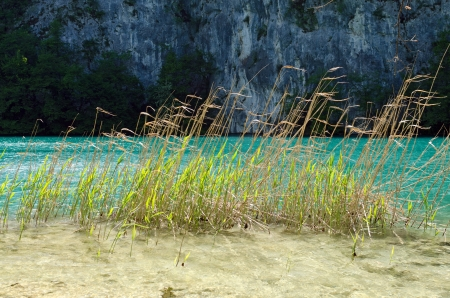 Blades of sedges in Tranquil Calm Lake. Plitvice, Croatia Stock Photo - 20185557