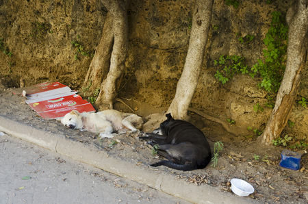 PALERMO, SICILY, ITALY - OCTOBER 3, 2012: two abandoned dog dozing near a park of the city. In Palermo are ubiquitous abandoned dogs. On October 3, 2012 in Palermo, Italy Editorial