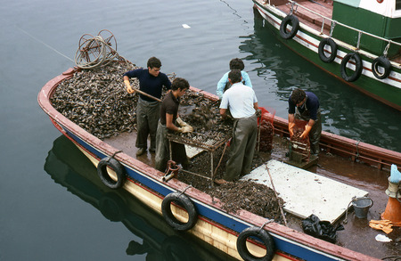 cleaning crew: EL GROVE, PONTEVEDRA, GALICIA, SPAIN - JULY, 1983: The crew of a fishing boat clean a mussel and put them in bags for sale on July, 1983 in El Grove, Pontevedra, Galicia, Spain Editorial