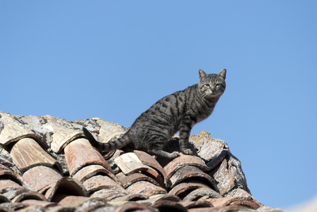 observer: domestic cat on the roof of a house in a village in Castile