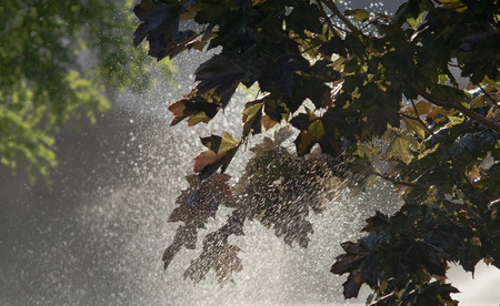 backlights: A sprinkler watering a garden with trees backlit