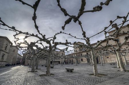 zamora: Backlight of the plane trees in the square of Viriato in the city of Zamora, Spain Stock Photo
