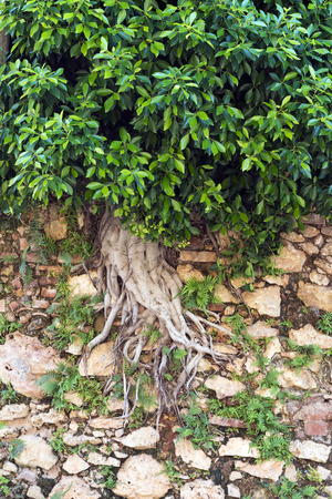 tropica: Tree Grows Through Wall