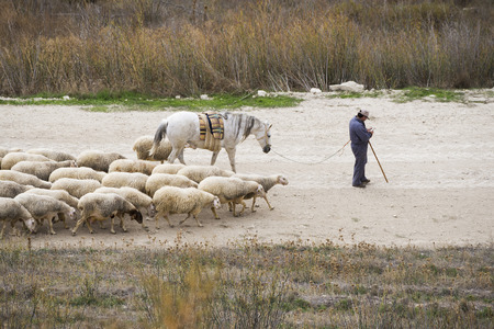 herder: Sheep and herder in field. Castilla, Spain Stock Photo