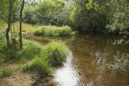 northern spain: Lone creek in northern Spain