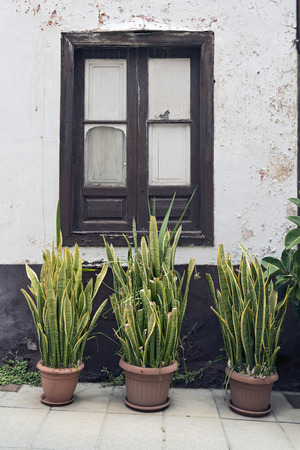 impaired: Three pots with sansevieria and a torn window