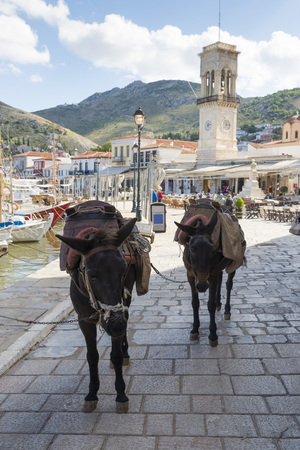 polyp corals: Donkeys are used for transportation on the island of Hydra in Greece where cars are not allowed