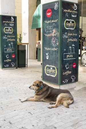 negligence: ATHENS, GREECE - OCTOBER 27, 2015: ATHENS, GREECE - OCTOBER 27, 2015: Stray dog at the door of a restaurant. In Athens there are many stray dogs Editorial