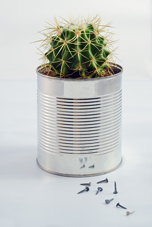 vegetable tin: Close up of a cactus in a tin can. White background