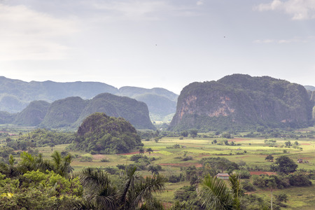 cuban culture: Mogotes in Vinales Valley in Cuba.