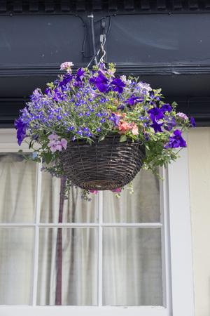 hanging basket: Hanging Basket in spring