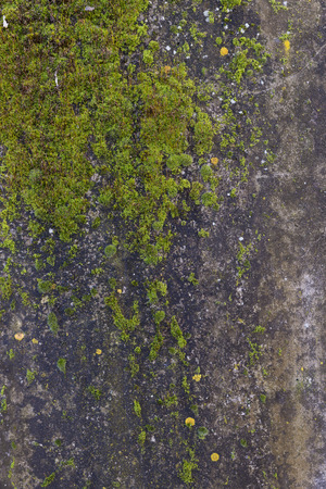 lichen: A concrete wall covered with lichen Stock Photo