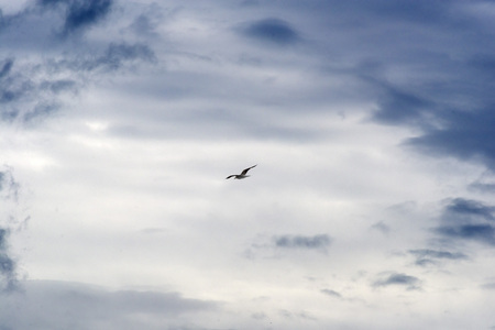 lofty: seagulls front of the sky