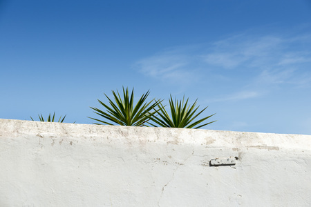 whitewashed: whitewashed wall in Ibiza Island