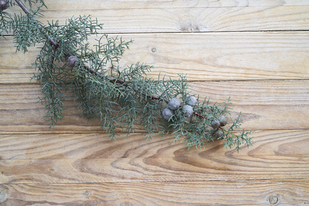 juniper tree: Branch and Berries of Juniper Tree over wood. copy space Stock Photo