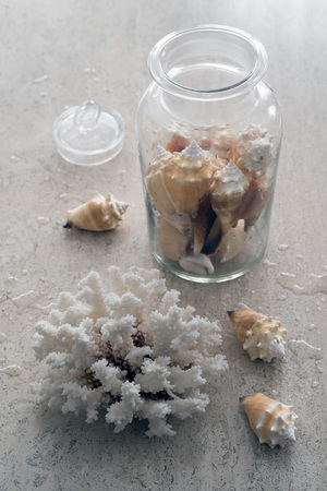 backlights: coral and jar holding shells Stock Photo