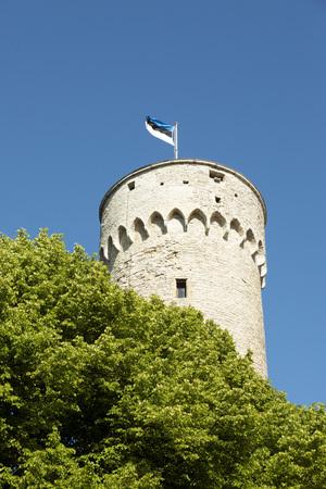 The Estonian Flag on the Tower on the Toompea Hill, Tallinn, Estonia