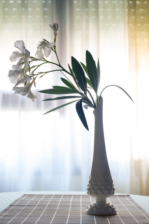 oleander: White Oleander flowers in a porcelain vase Stock Photo