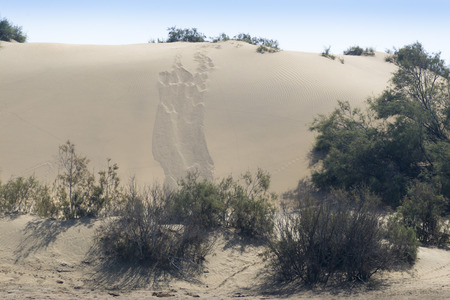 desert ecosystem: Natural Reserve of Dunes of Maspalomas, in Gran Canaria, Canary Islands, Spain