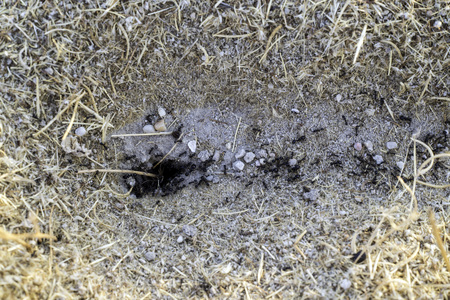 anthill: close-up of an anthill at dawn