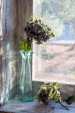 flores secas: vase with dried flowers in a window sill Foto de archivo