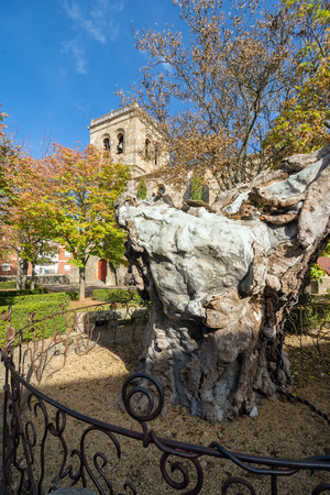 centenary: SORIA, SPAIN - NOVEMBER 2, 2016: Dry Elm. The centenary tree, sick and languishing in front of the Church of El Espino inspired the poet Antonio Machado, who saw a parallel between the dying elm and his ailing wife.