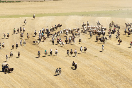 bovid: Transhumance of cattle in Spain during the summer