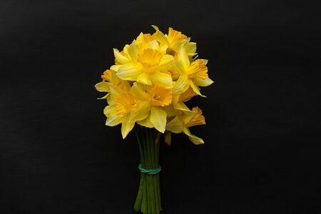 the bouquet of yellow narcison on a black background 版權商用圖片