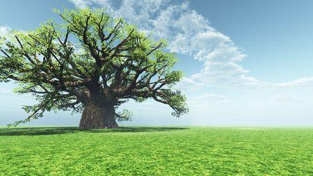 Impressive baobab Stock Photo