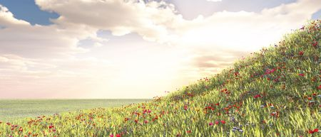 Wheat field with flowers photo