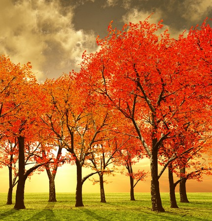 Beautiful autumn